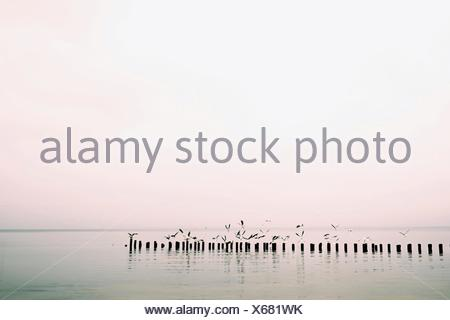 Seagulls Flying Over Sea Against Clear Sky - Stock Photo
