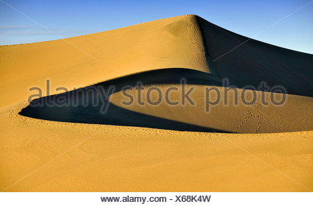 Star Dune, the highest dune of the Mesquite Flat Sand Dunes, known from Star Wars, early morning light, Stovepipe Wells - Stock Photo
