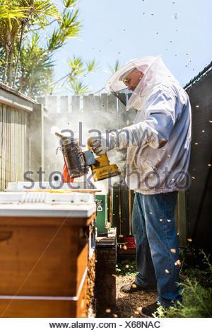 Australia, Queensland, Beekeeper using smoker on beehive - Stock Photo