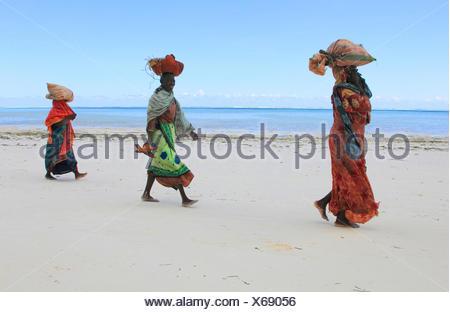 women carrying bags with seaweeds on their heads on sandy beach, Tanzania, Sansibar - Stock Photo