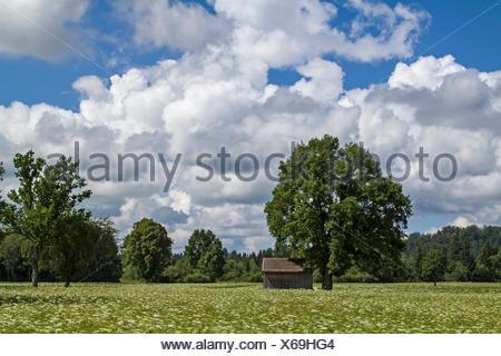 Die Gaißacher Filze eine idyllische Moorlandschaft im Voralpenland bei Bad Tölz - Stock Photo
