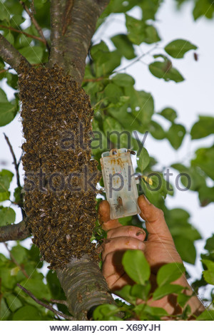 Mother bee in cell - Stock Photo