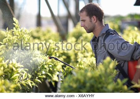 Young man spraying pesticide in plant nursery - Stock Photo