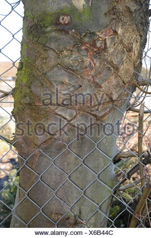 Wire-fence in the bark - Stock Photo