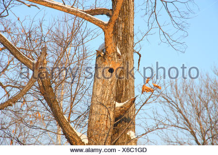 Bird nest in hollow tree trunk - Stock Photo