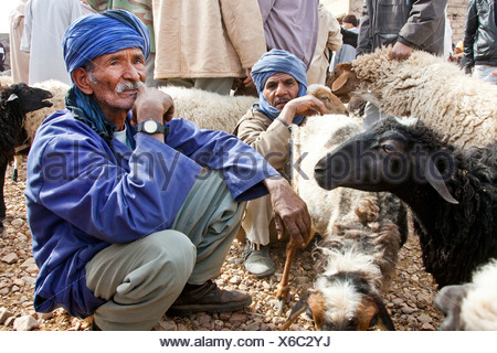 Men wearing Djellabas, traditional robes, and sheep on the animal market in Tinezouline, Draa valley, Morocco, Africa - Stock Photo