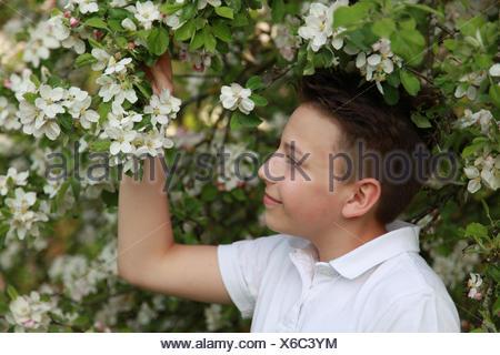 boy under flowering apple tree - Stock Photo