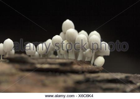 Mushroom, Gurjee, Tripura , India - Stock Photo