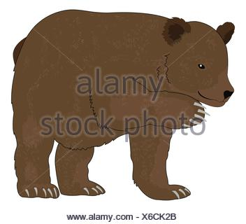 Bear or Ursus arctos, Brown, vector illustration - Stock Photo