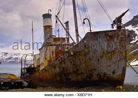 The old Whaler, Petrel, now beached and rusting, at the whaling station at Grytviken, South Georgia.Grytviken is now a research - Stock Photo