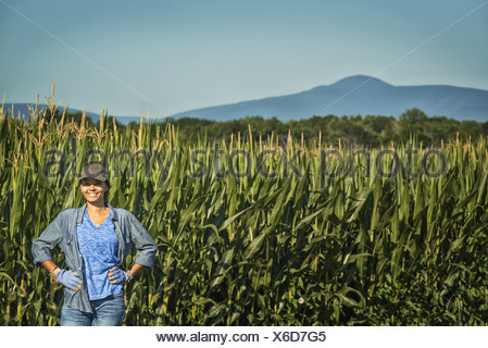New York state USA field of tall maize plants towering over woman - Stock Photo
