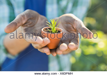 Man holding up tiny potted plant - Stock Photo