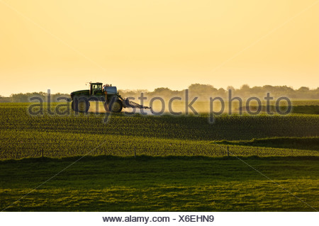 Post-emergent herbicide being applied to an early growth grain corn field by a John Deere sprayer in late afternoon light / Iowa - Stock Photo