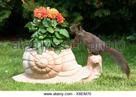 European squirrel - standing on clay figure Sciurus vulgaris - Stock Photo