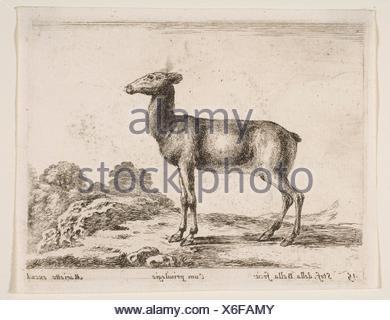 Plate 15: doe, from 'Various animals' (Diversi animali). Series/Portfolio: 'Various animals' (Diversi animali); Artist: Stefano della Bella (Italian, - Stock Photo