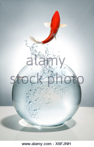 Digital composite of gold fish - Stock Photo