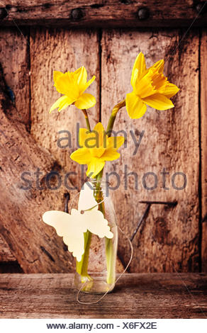 Three Stalks of Bright Yellow Daffodil Flowers in Clear Glass Vase with Paper Butterfly Cut Out on Rustic Table in front of Weathered Natural Wooden Door - Stock Photo