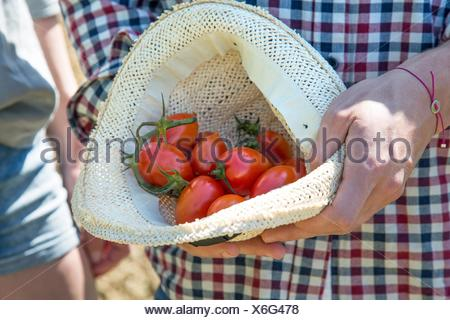 Cropped view of young man holding tomatoes in hat - Stock Photo