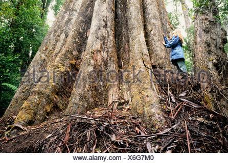 Tree zozed for logging - Stock Photo
