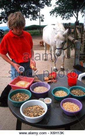 Pferdepfleger bei der Arbeit - Stock Photo