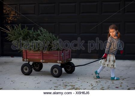 Portrait of a girl pulling cart with christmas tree - Stock Photo