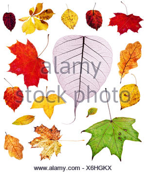 set of multicolored autumn leaves isolated - Stock Photo