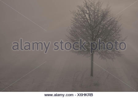 Winterlandschaft im Nebel am Morgen, Deutschland, Mecklenburg-Vorpommern, Biestow, Rostock | winter scenery with mist in the mor - Stock Photo