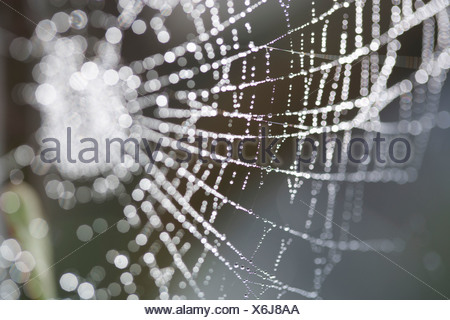 Dew on a spider's web - Stock Photo