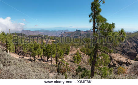 Spain, Europe, San Bartolome de Tirajana, Gran Canaria, Canary Islands, view from, Pico de las Nieves, landscape, forest, wood, - Stock Photo