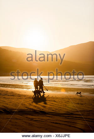 The sun sets behind a couple walking on the beach with their two dogs at Inch Beach, on the Dingle Peninsula of County Kerry, Ireland. - Stock Photo
