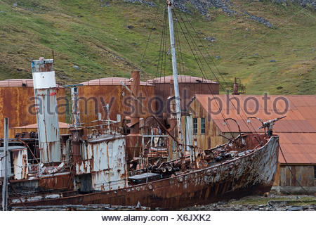 Whaler Shipwreck at Grytviken, South Georgia. Petrel built in 1928 at Oslo and stopped whaling in 1956 - Stock Photo