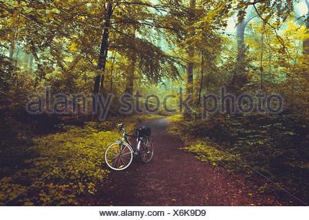 Fahrrad auf Waldweg, Wuppertal, Deutschland - Stock Photo