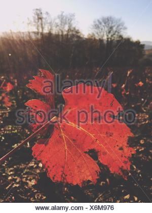 Close-Up Of Leaves Growing On Field During Autumn - Stock Photo