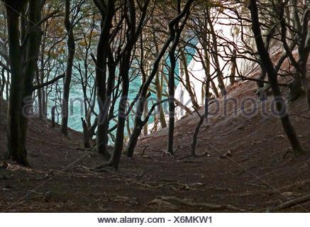 Moens Klint chalk cliffs, Moen island, Denmark, Europe - Stock Photo