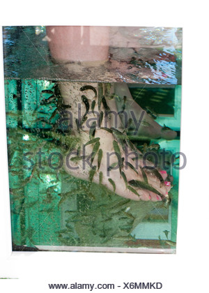 Fish spa pedicure with rufa garra stock photo 152713703 for Fish cleaning feet
