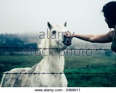Cropped Hand Touching White Horse In Ranch Against Sky - Stock Photo
