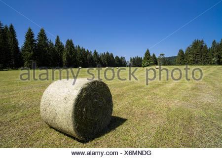 Heuballen auf Feld - Stock Photo