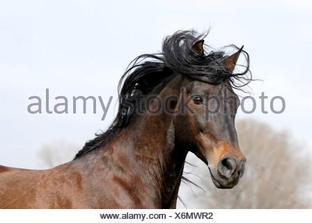 Stallion - Stock Photo