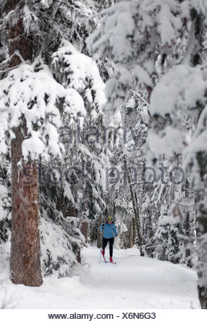 A young woman Nordic skis through the trees near Lake Louise in Banff National Park. - Stock Photo