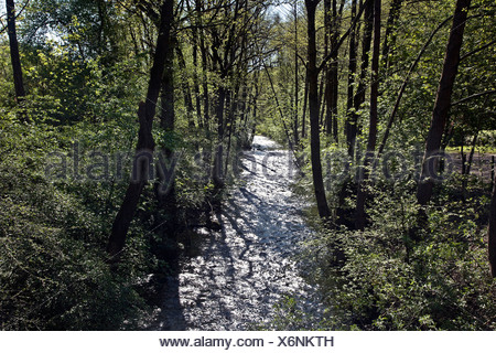 Ennepe in the Ennepe Valley, Germany, North Rhine-Westphalia - Stock Photo