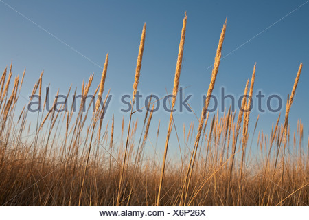 Seagrass against blue sky - Stock Photo