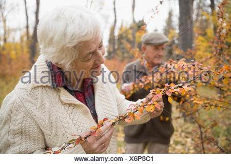 Senior woman examining autumn leaves on branch in park - Stock Photo