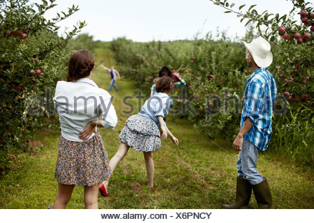 Rows of fruit trees in an organic orchard A man and three young women throwing fruit at each other - Stock Photo