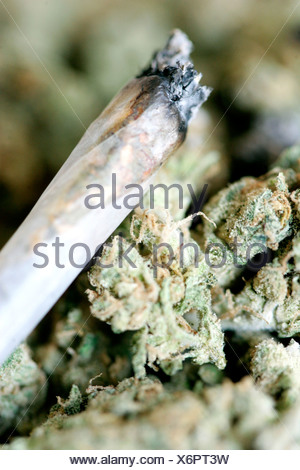 Burning Joint lies on top of dried marijuana blooms - Stock Photo