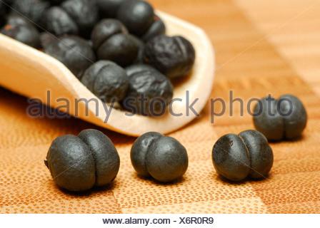 Tasmanian Pepper, Mountain Pepper - Stock Photo