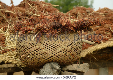 Basket filled with millet, Pakete, Cameroon, Africa