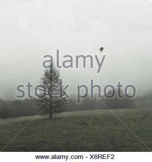 Baum im Winter auf Weide bei Nebel, Wuppertal, Deutschland - Stock Photo