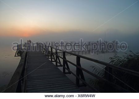 Wooden jetty in fog on Lake Federsee at sunrise, morning mood, nature reserve near Bad Buchau, Upper Swabia, Baden-Wuerttemberg - Stock Photo