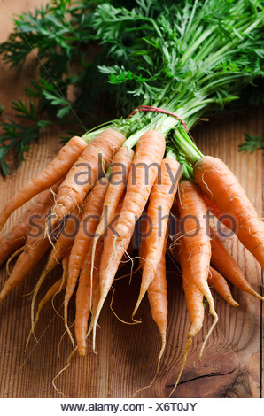 Bunch of fresh carrots with green stalks - Stock Photo