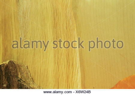 sycamore maple, great maple (Acer pseudoplatanus), wood - Stock Photo